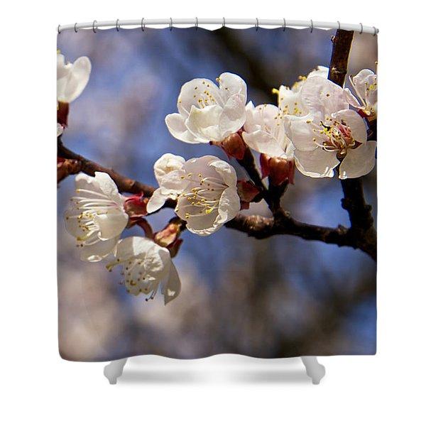 White Cherry Blossoms Shower Curtain