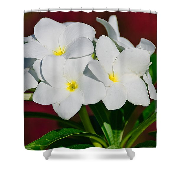 White Frangipani Shower Curtain