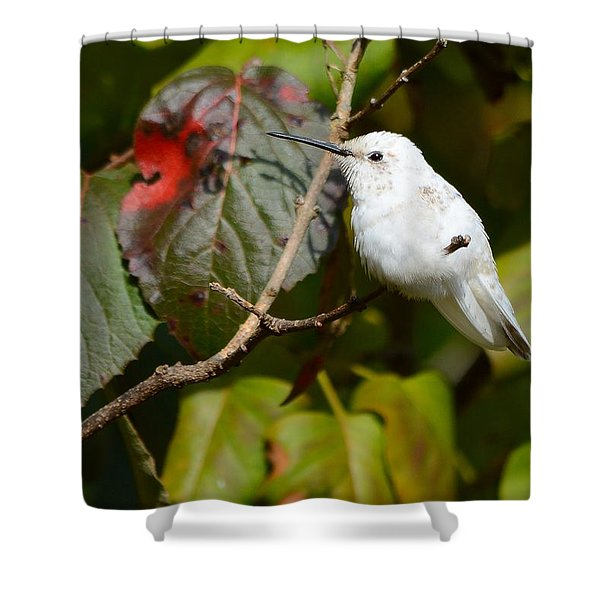 White Hummingbird Shower Curtain