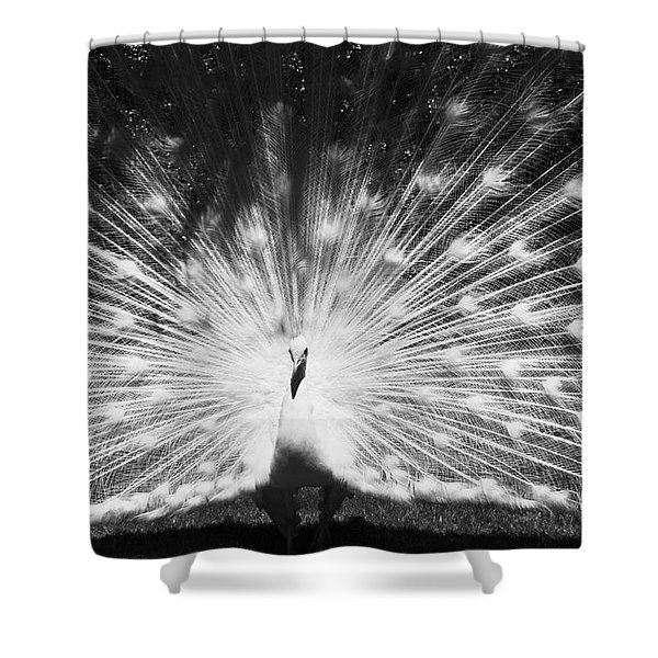 White Peacock Bw Shower Curtain
