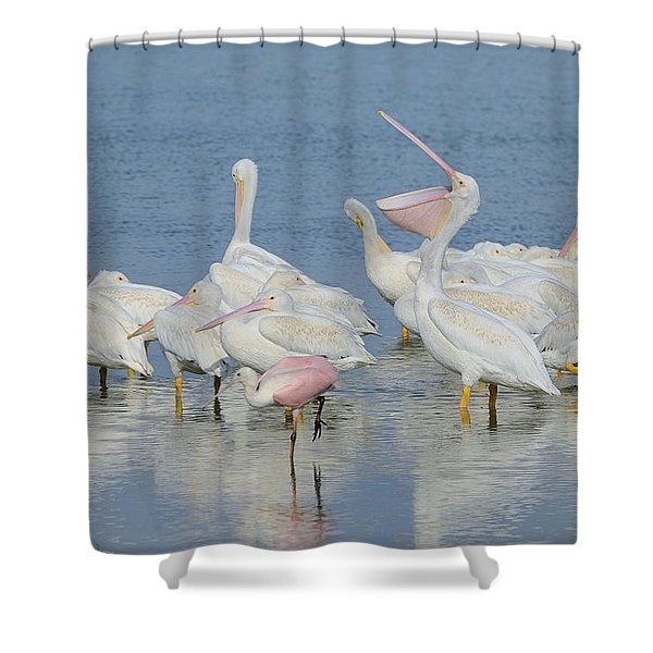 White Pelicans And Roseate Spoonbills Shower Curtain