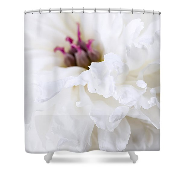 White Peony Flower Close Up Shower Curtain