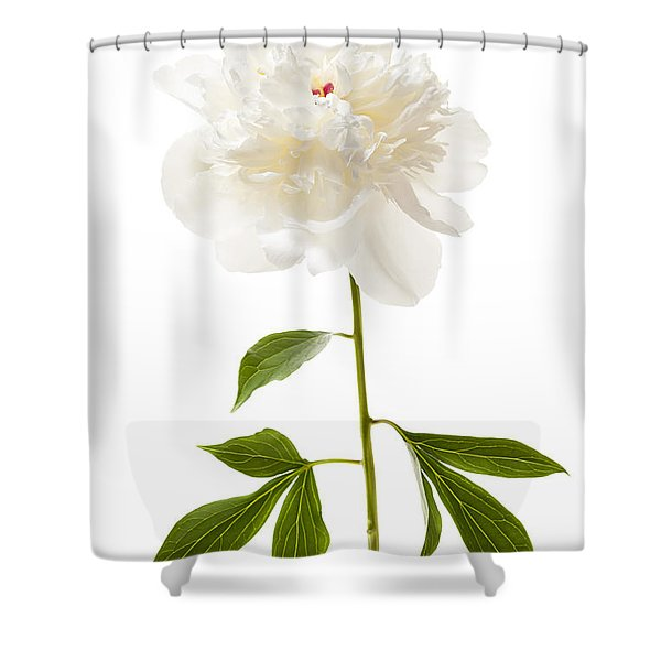 White Peony Flower On White Shower Curtain