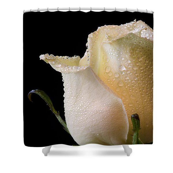 White Rose Close-up Shower Curtain