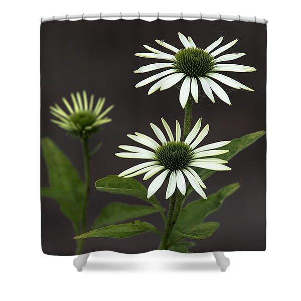 White Swans Shower Curtain