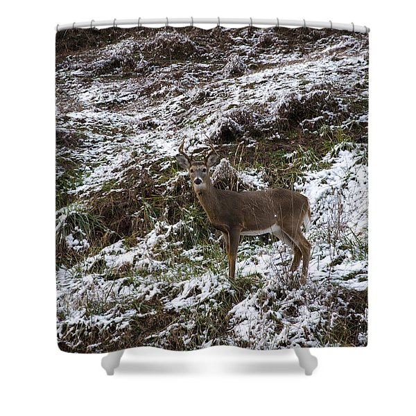 White Tailed Deer Almost Perfect Camouflage  Shower Curtain