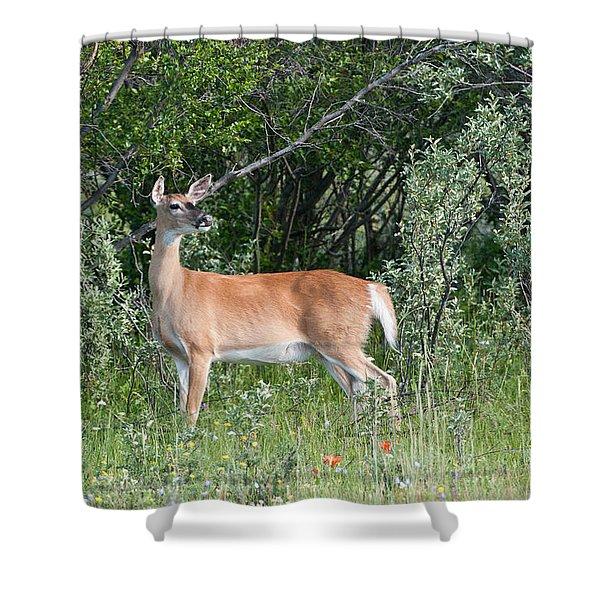 White-tailed Deer Doe Shower Curtain