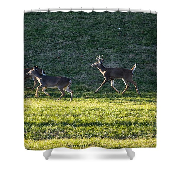 White Tailed Deer In Motion Shower Curtain