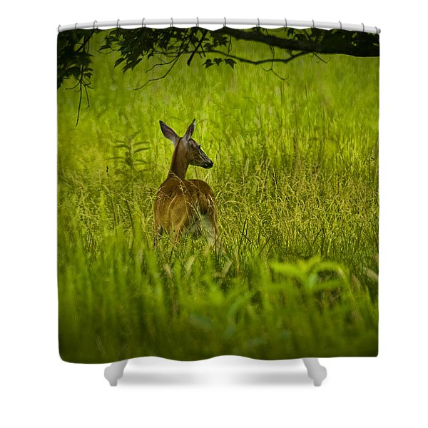 White Tailed Doe Deer In A Field In Cade's Cove Shower Curtain
