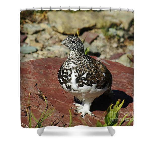 White-tailed Ptarmigan Shower Curtain