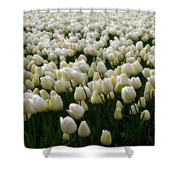 White Tulip Field  Shower Curtain