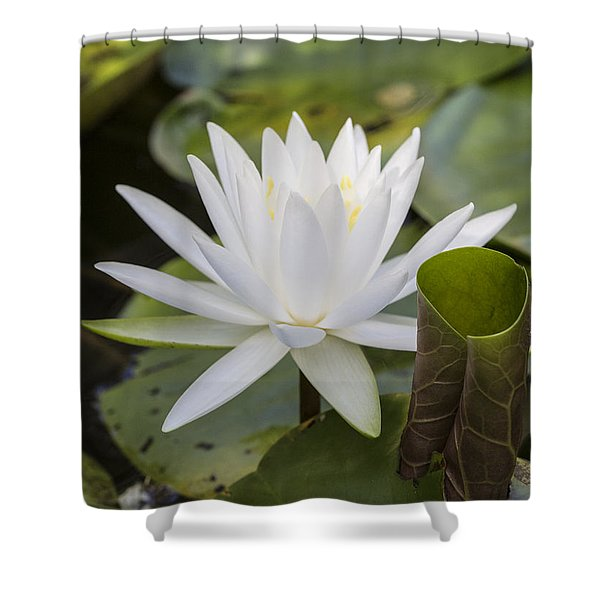 White Water Lily With Curiously Scrolled Leaf Shower Curtain