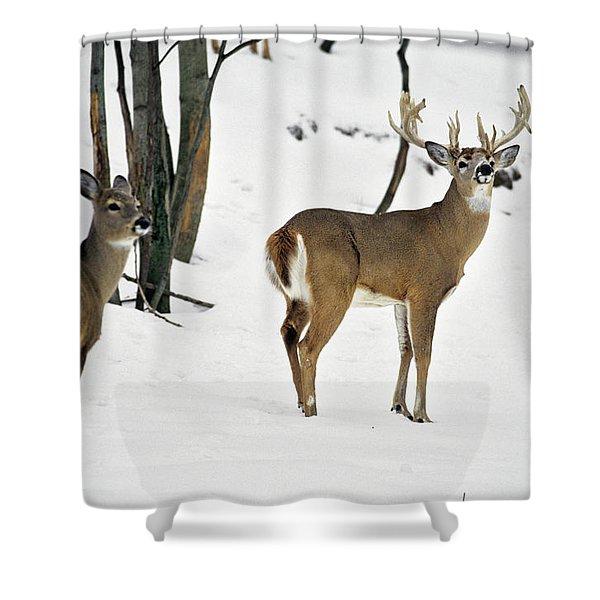Whitetail Deer In Snow Odocoileus Shower Curtain
