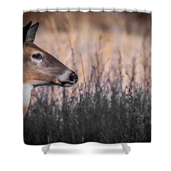 Whitetail Doe Keeping Watch 2 Shower Curtain