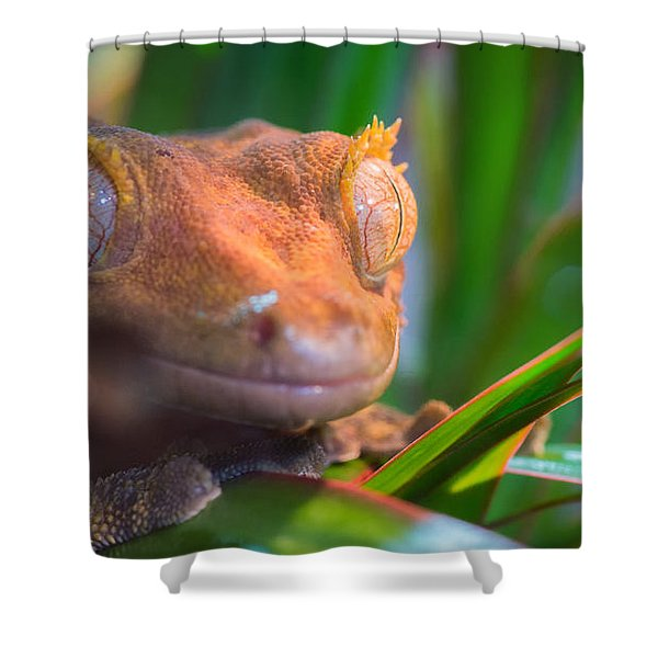 Why Hello0 Shower Curtain