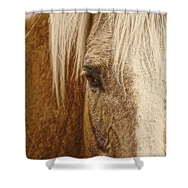 Wickenburg's Palomino Gold Shower Curtain