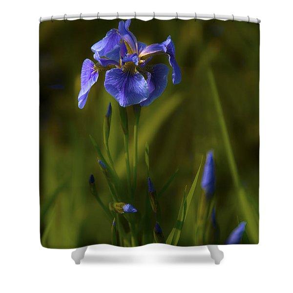 Wild Alaskan Iris Shower Curtain