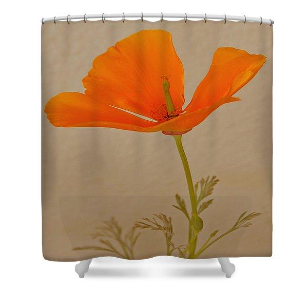 Wild California Poppy No 1 Shower Curtain