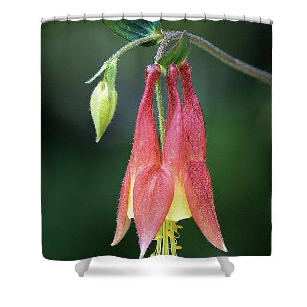 Wild Columbine - D008442 Shower Curtain