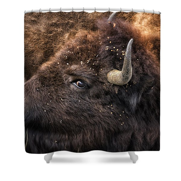 Wild Eye - Bison - Yellowstone Shower Curtain