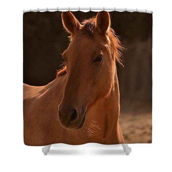 Wild Horse Portrait  Brighter  Shower Curtain