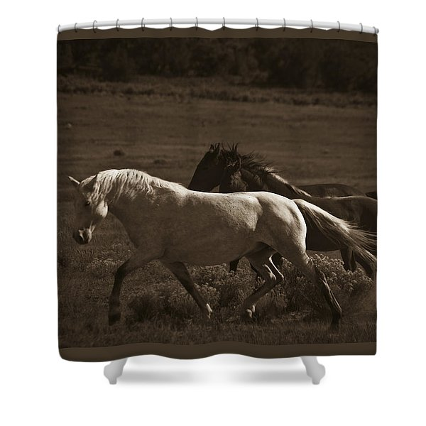 Shower Curtain featuring the photograph Wild Mustangs Of New Mexico 10 by Catherine Sobredo