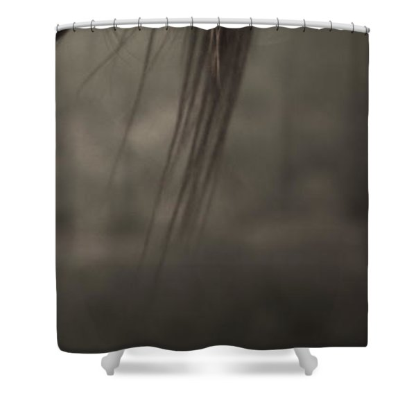 Shower Curtain featuring the photograph Wild Mustangs Of New Mexico 11 by Catherine Sobredo