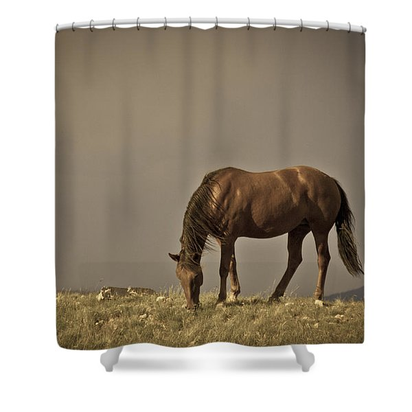 Wild Mustangs Of New Mexico 20 Shower Curtain