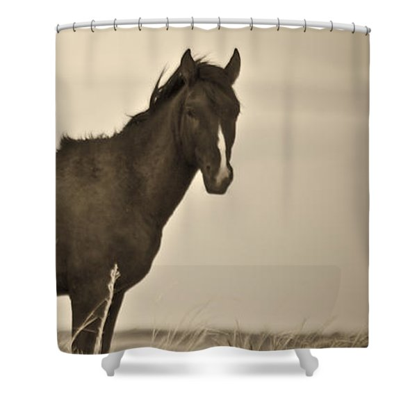 Shower Curtain featuring the photograph Wild Mustangs Of New Mexico 3 by Catherine Sobredo