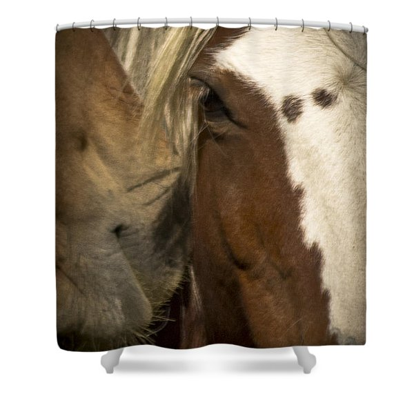 Shower Curtain featuring the photograph Wild Mustangs Of New Mexico 32 by Catherine Sobredo