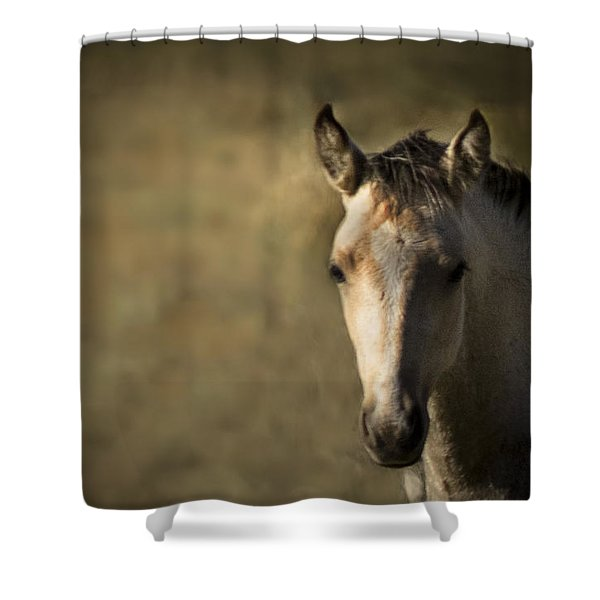 Shower Curtain featuring the photograph Wild Mustangs Of New Mexico 35 by Catherine Sobredo