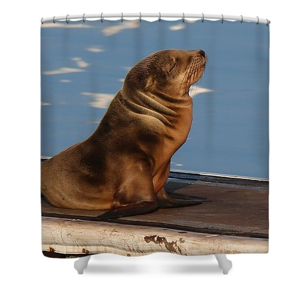 Wild Pup Sun Bathing - 2 Shower Curtain