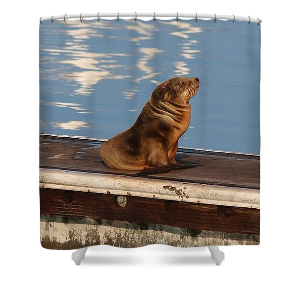 Wild Pup Sun Bathing Shower Curtain