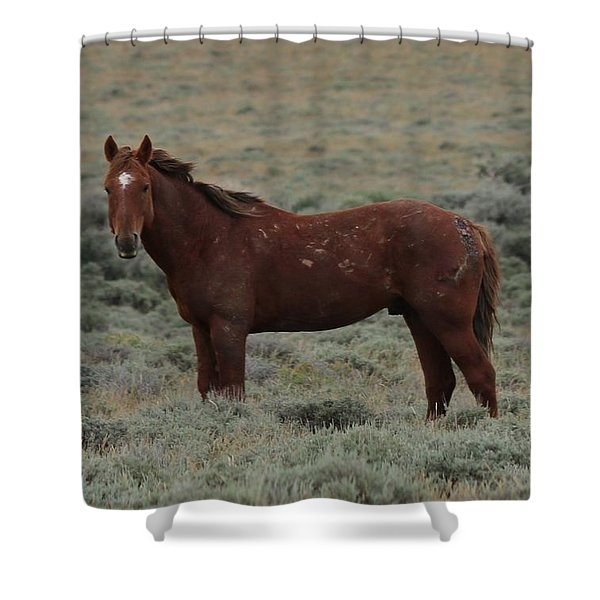 Wild Scars Shower Curtain