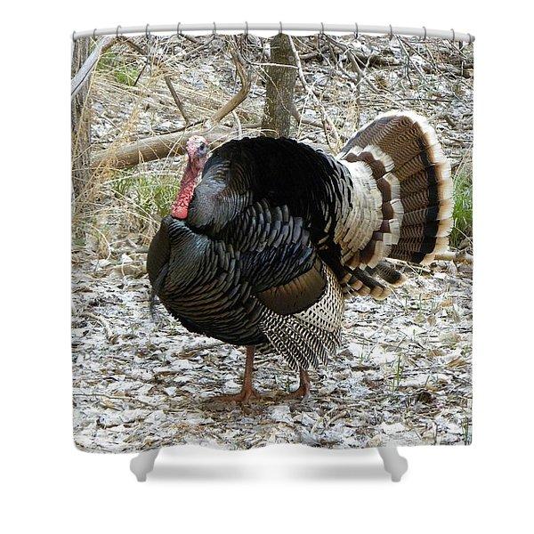 Wild Turkey Mnt Zion Ut Shower Curtain