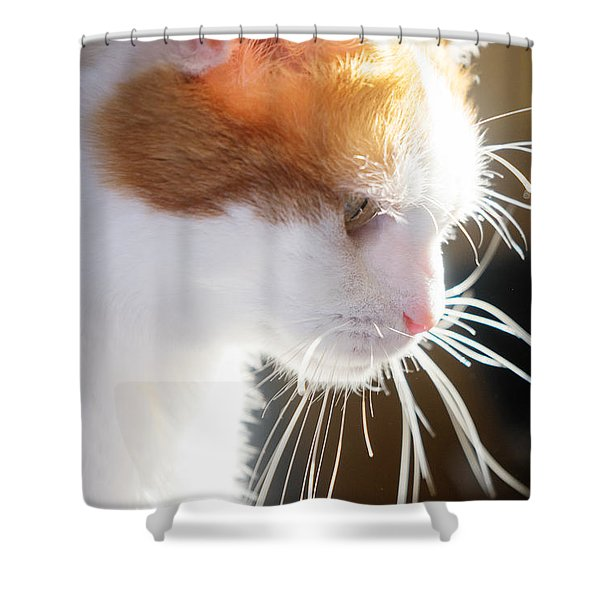 Wild Whiskers Shower Curtain