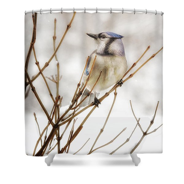 Winter Blue Jay Shower Curtain