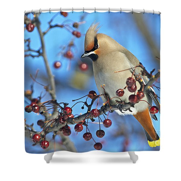 Winter Colors.. Shower Curtain