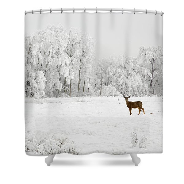 Shower Curtain featuring the photograph Winter Doe by Mary Jo Allen
