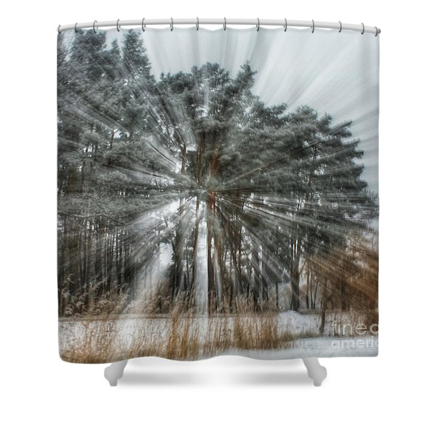 Winter Light In A Forest Shower Curtain