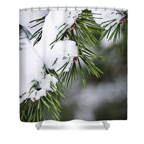 Winter Pine Branches Shower Curtain