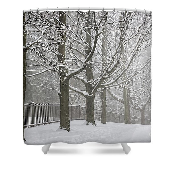 Winter Trees And Road Shower Curtain