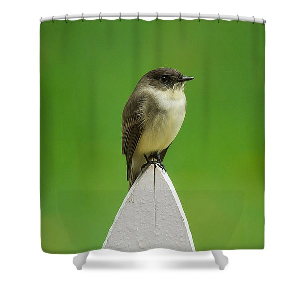 Shower Curtain featuring the photograph Wish I Was The Twitter Bird by Robert L Jackson