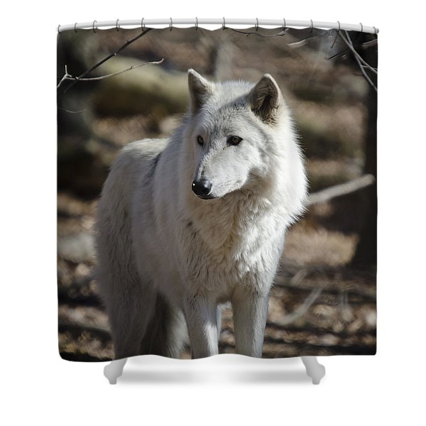 Timber Grey Wolf Shower Curtain