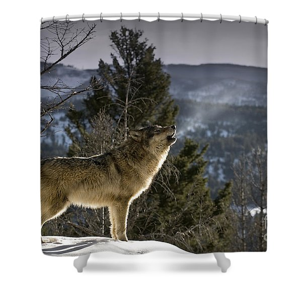 Wolves Nature Song Shower Curtain