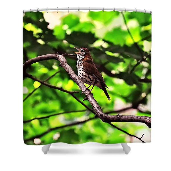 Wood Thrush Singing Shower Curtain