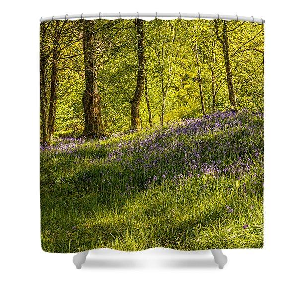 Woodland Of Bluebells Shower Curtain