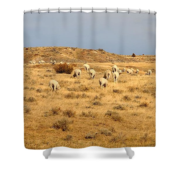 Wool You Sheep With Me Shower Curtain