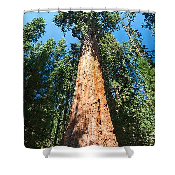 World Famous General Sherman Sequoia Tree In Sequoia National Park. Shower Curtain