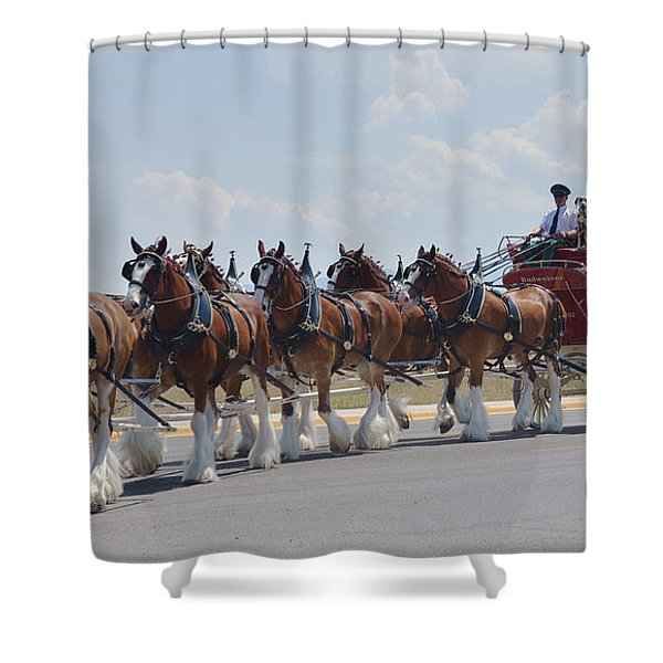 World Renown Clydesdales 2 Shower Curtain